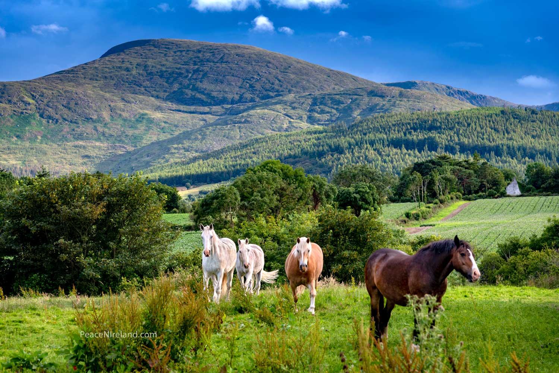 Near Castlewellan, County Down