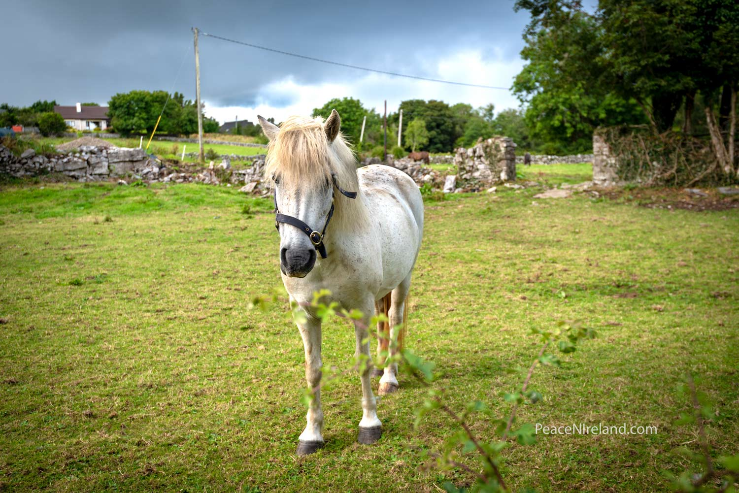 The 'greetings' pony - welcoming visitors along the laneway to Aughnanure Castle